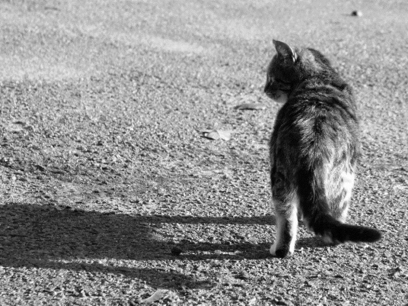 Кот ушел из дома