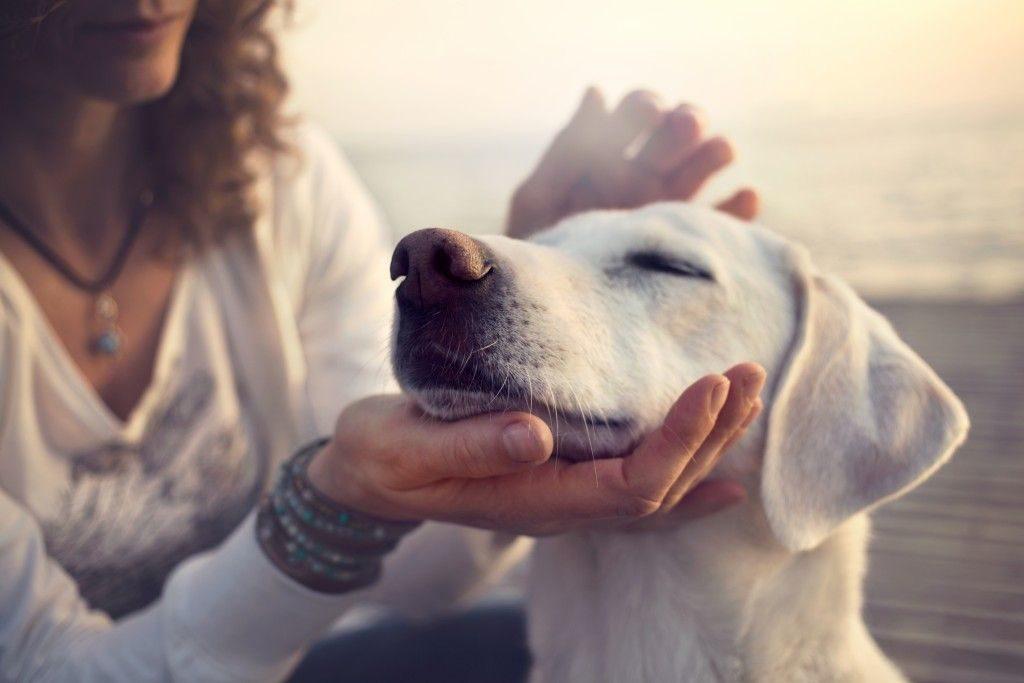 Старинные приметы о собаках