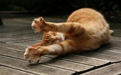 Народные приметы рыжий кот