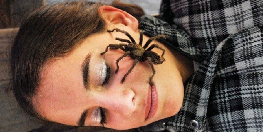 паук на голове