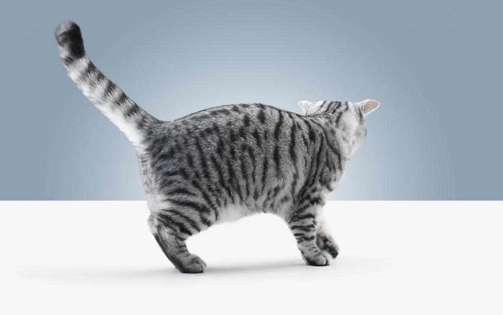почему уходят кошки из дома