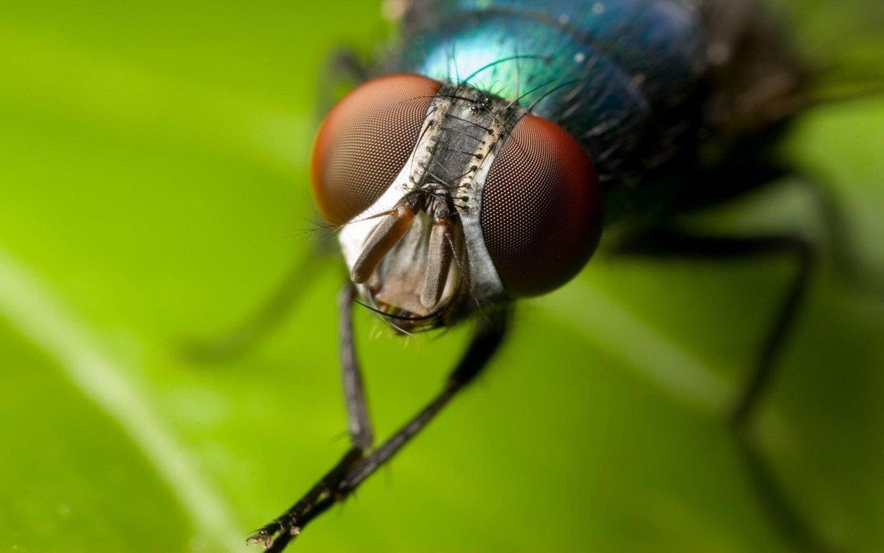 примета муха