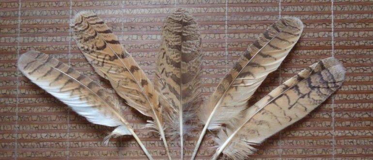 примета найти перо птицы