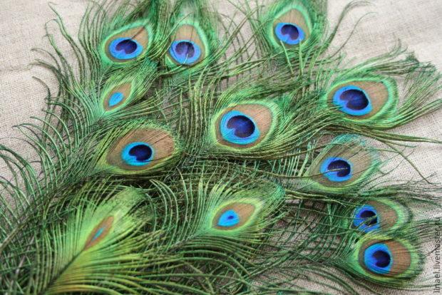 Приметы перья павлина