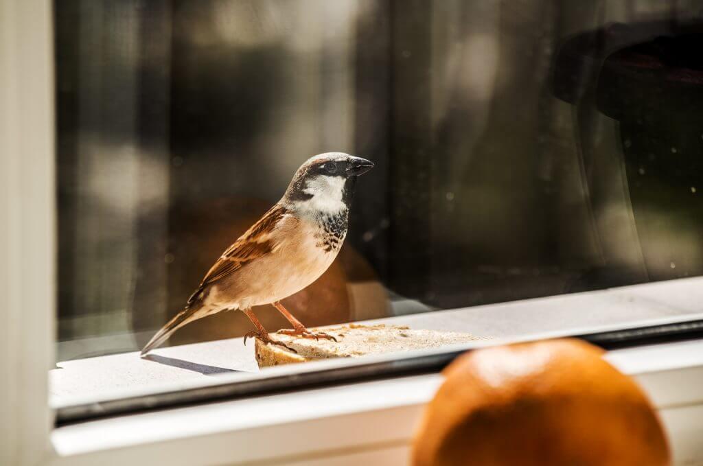 Птица села