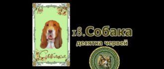 Значение карты Собака