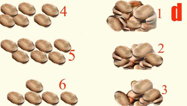 Как гадать по количеству бобов