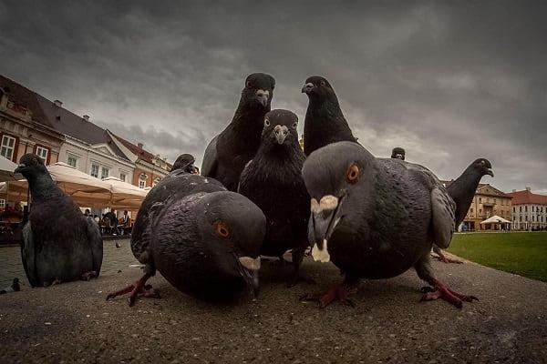 Народные приметы птица
