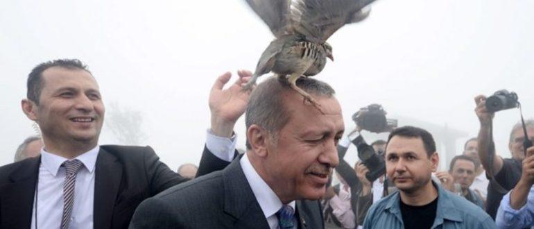 примета птица