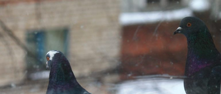птица врезалась в окно
