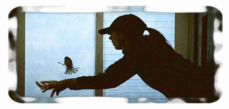 Птица залетела