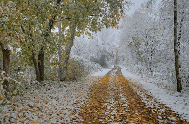 Снег ложится