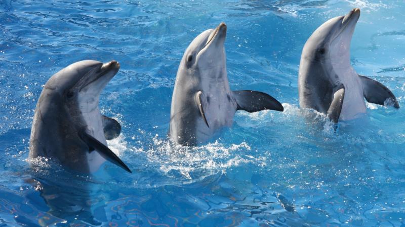 снятся дельфины