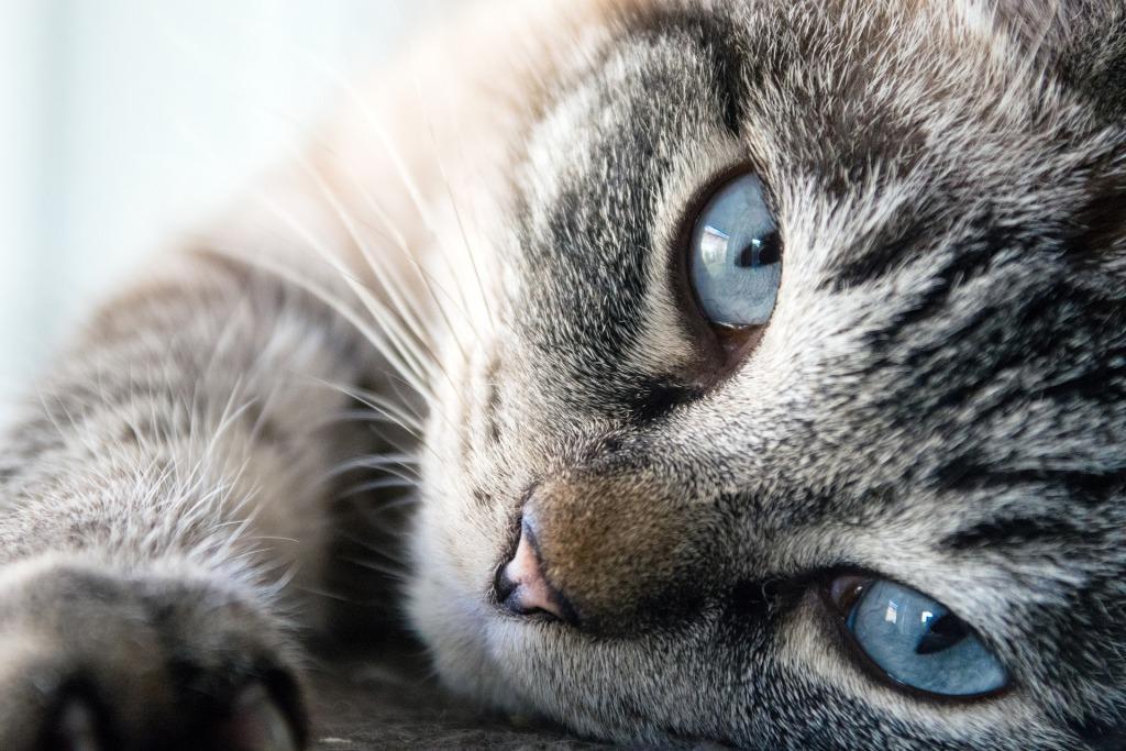 кошка толкование сновидения