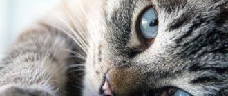 снится агрессивная кошка