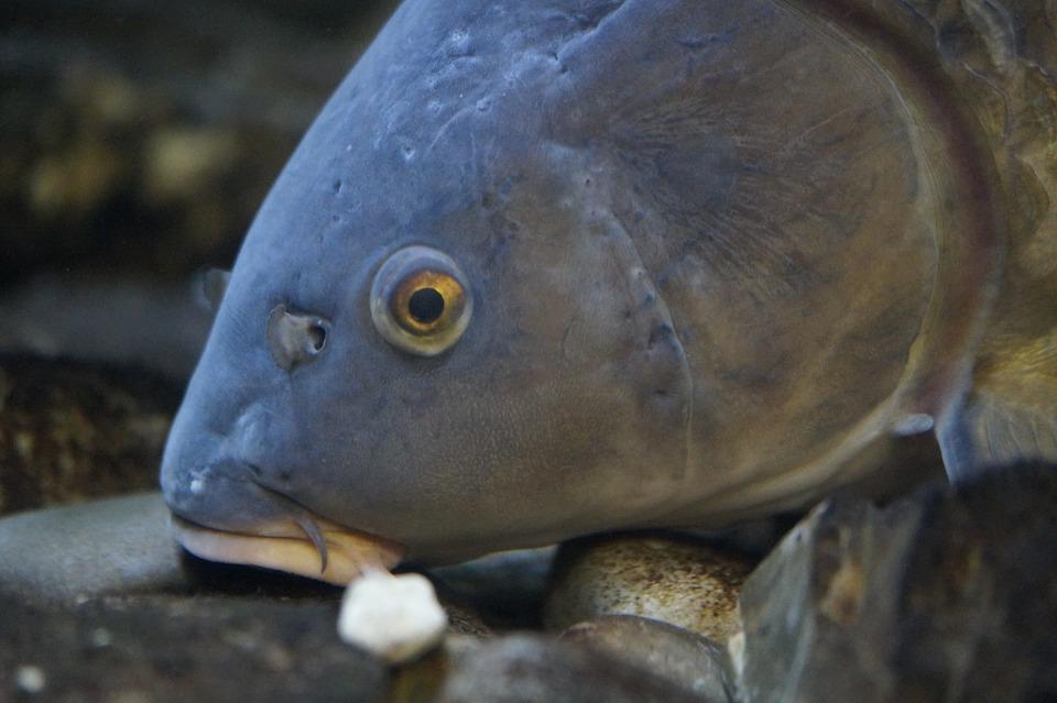 снится голова рыбы