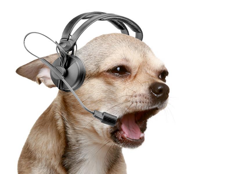 К чему снится говорящая собака