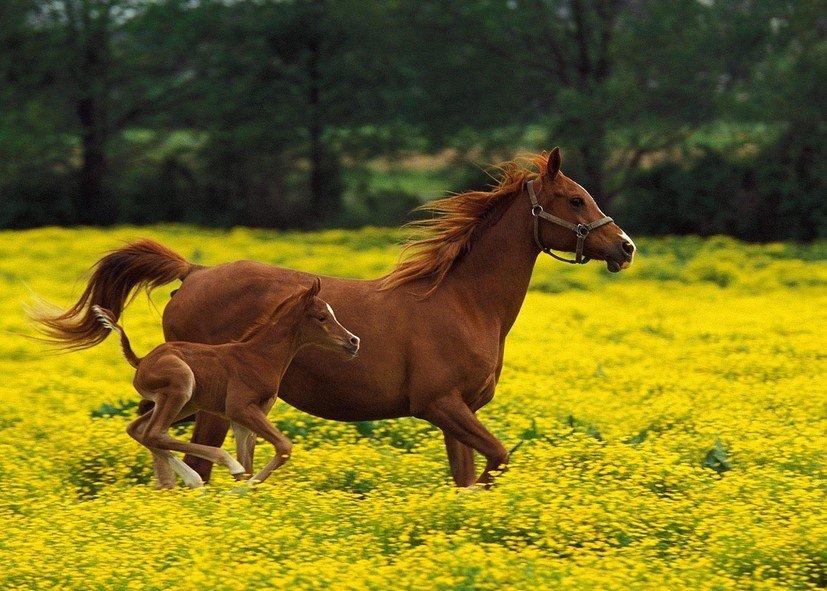 снится лошадь
