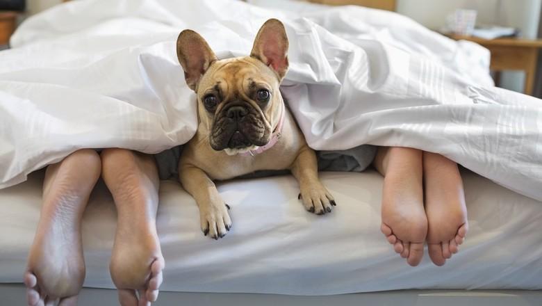 снится завести собаку