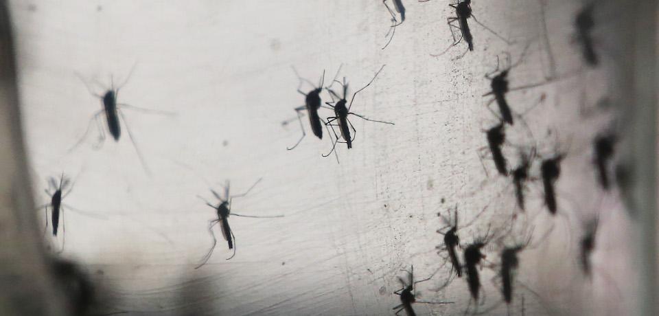 снятся комары