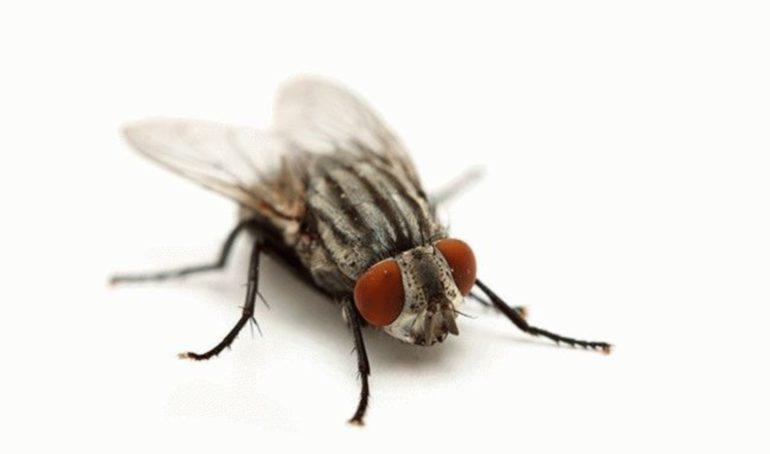 снятся мухи