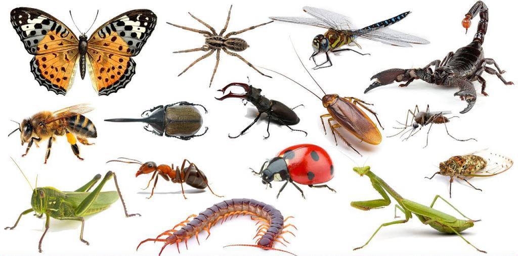 снятся насекомые