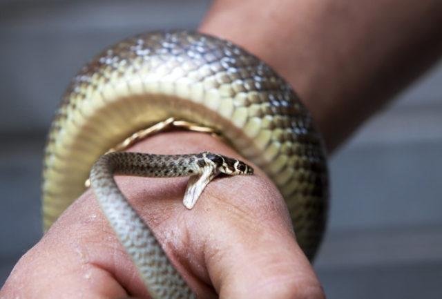 Видеть во мне укус змеи значение