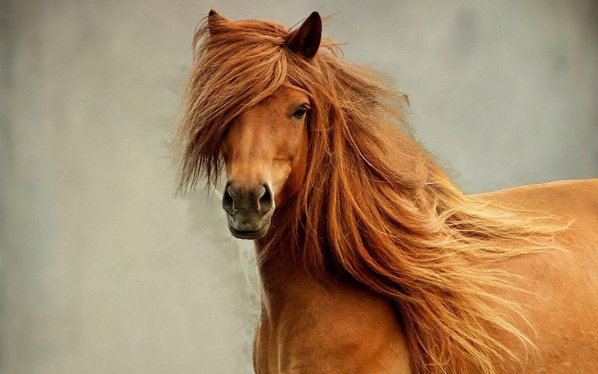 Действия лошади
