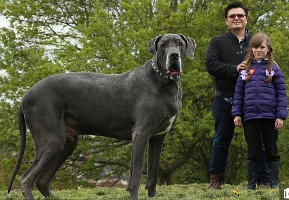 К чему снится большая собака