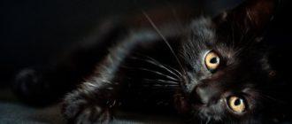 снится черный котенок