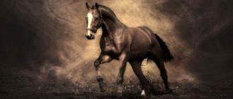 лошадь женщине коричневая