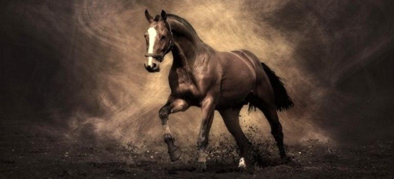 Сонник — лошади: к чему снится во сне рыжая, черная, белая, коричневая, серая, пятнистая лошадь? К чему снится образ, силуэт, тень лошади с гривой, рогами, крыльями: толкование сна для мужчин и женщин