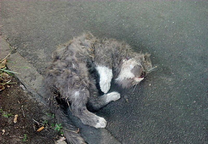 снится мертвая кошка