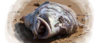 снится мертвая рыба