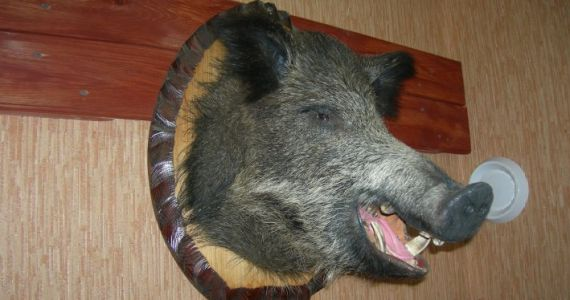 К чему снится мертвая свинья