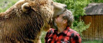 снится нападение медведя