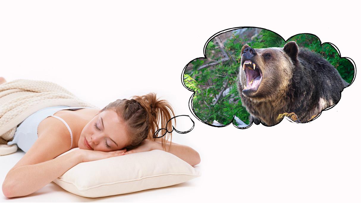 снится охота на медведя