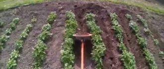 снится окучивать картошку