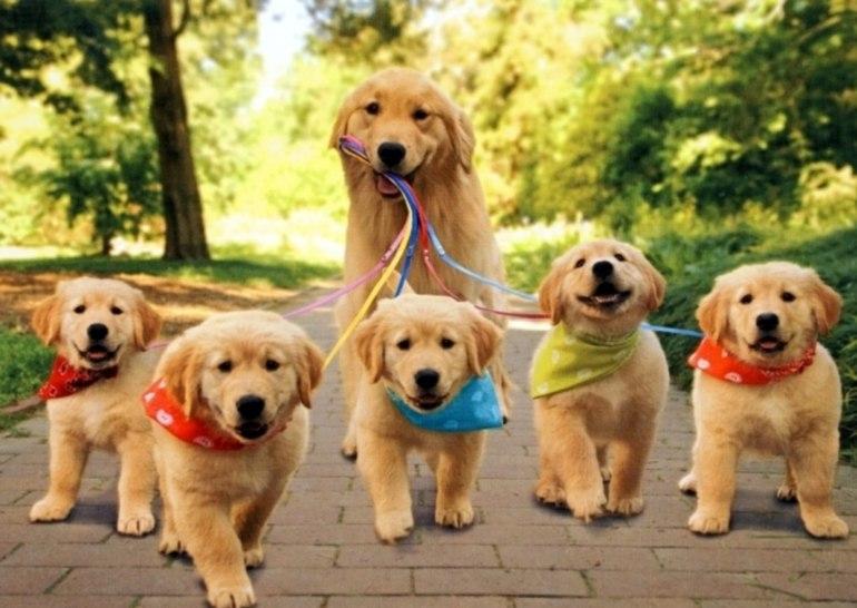 снится покупка собаки