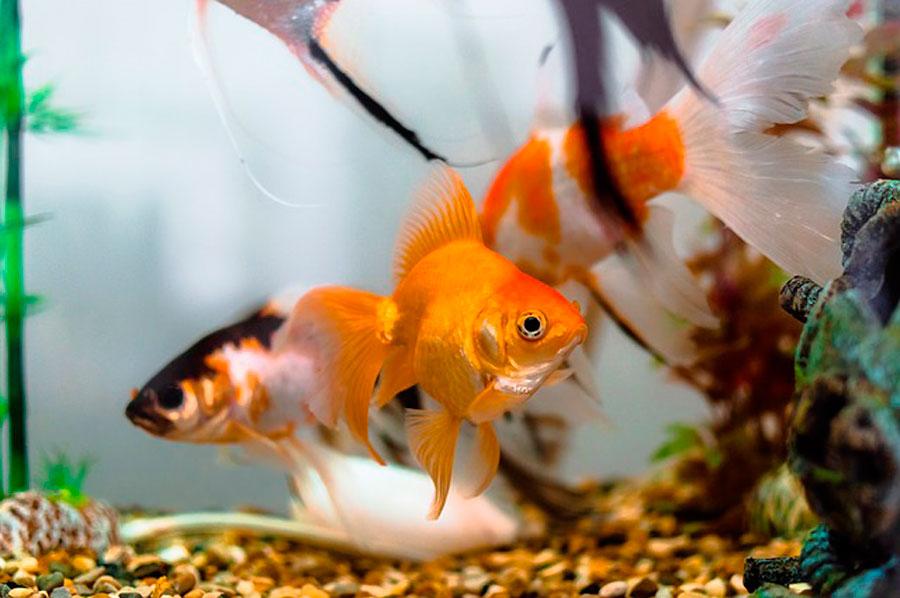 К чему снится рыбы