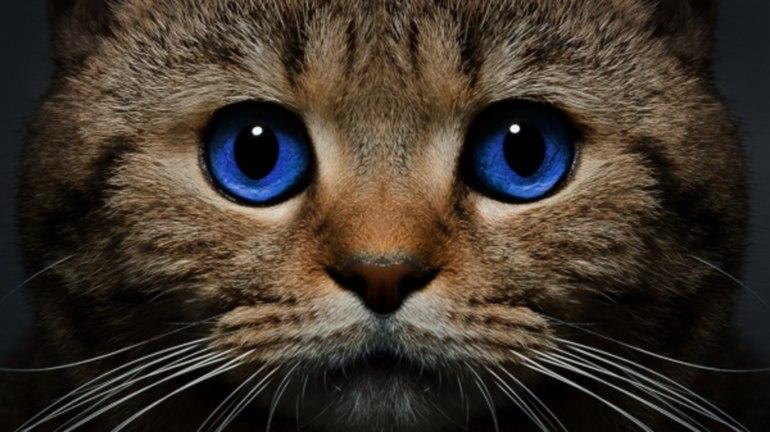 снится смерть кошки
