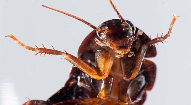 снятся дохлые тараканы
