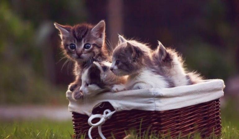 к маленькие котята много женщине