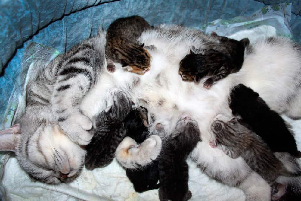 снятся новорожденные котята