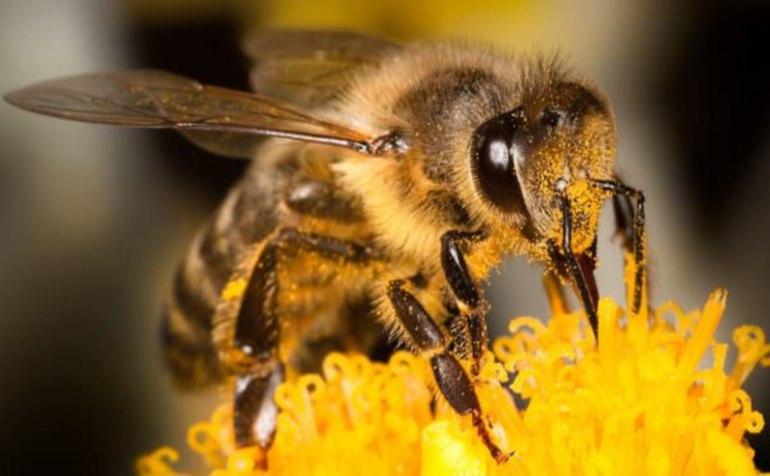 снятся пчелы