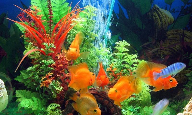 снятся рыбы в аквариуме