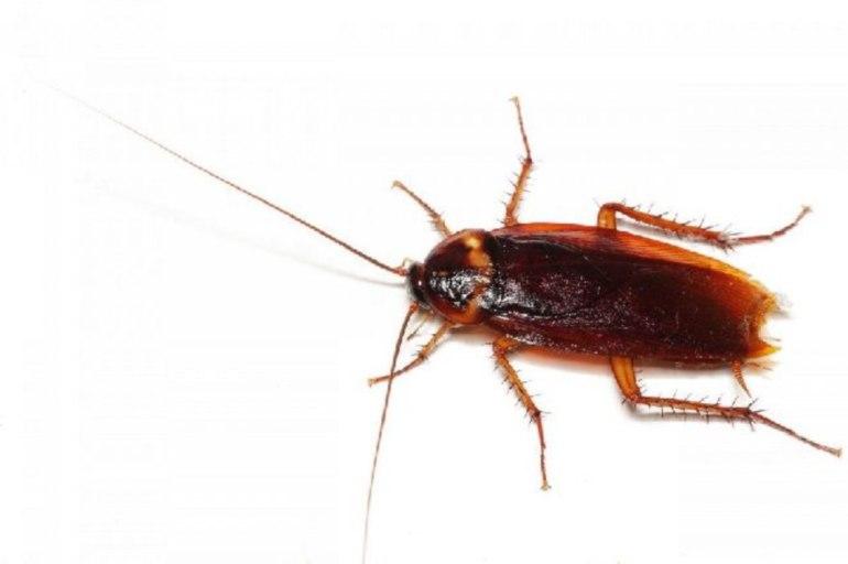снятся тараканы много и живые
