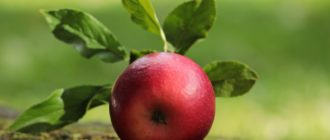 снятся яблоки очень много яблок