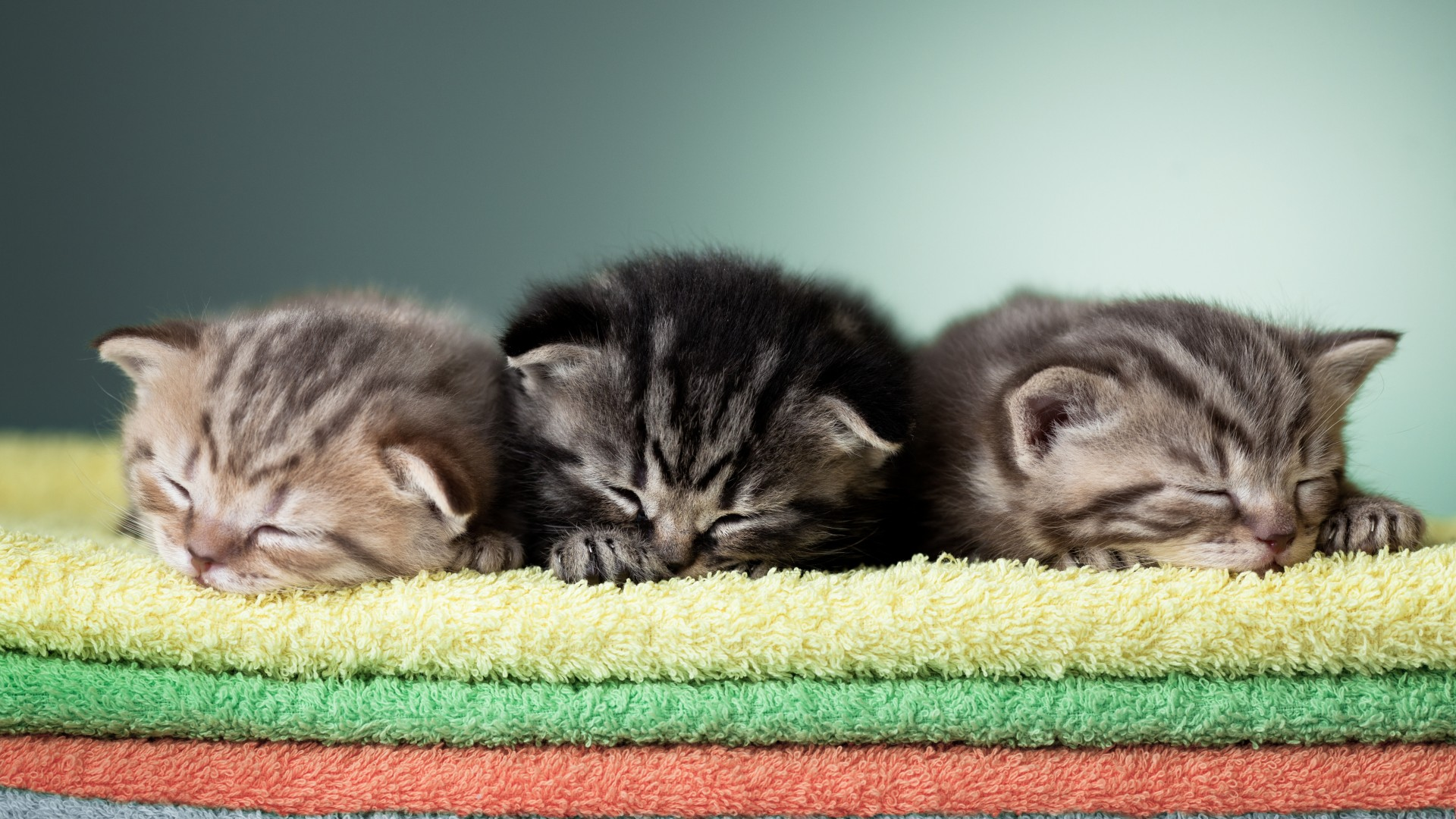 котенка во сне