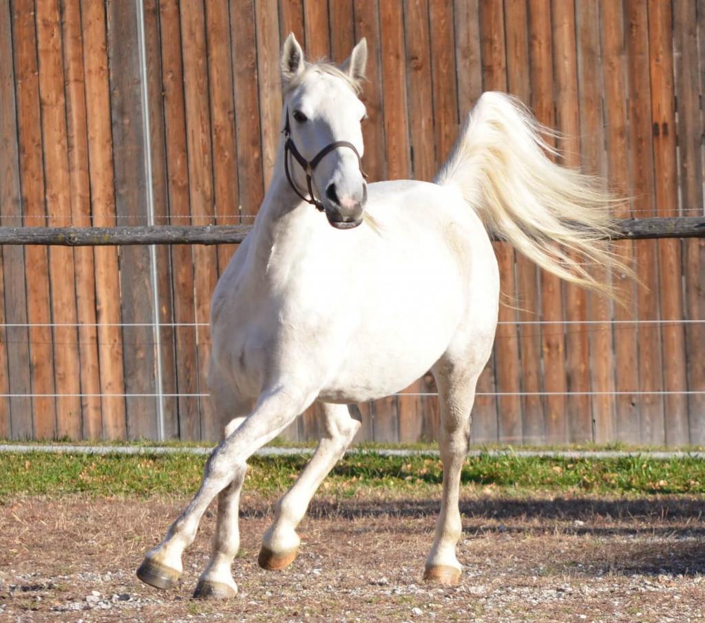 Кормить лошадь